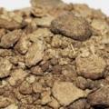 خرید عمده انواع کنجاله زیتون در کشور ما به چه صورتی امکان پذیر است ؟