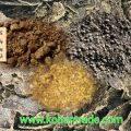 خرید سویا هندی تضمینی از بندر امام و بنادر کشور